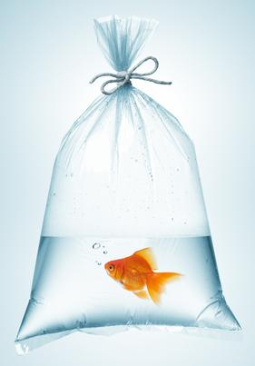 Goldfish correctly packaged for transporting.