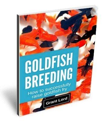 E-Book Goldfish Breeding - How to successfully raise Goldfish fry
