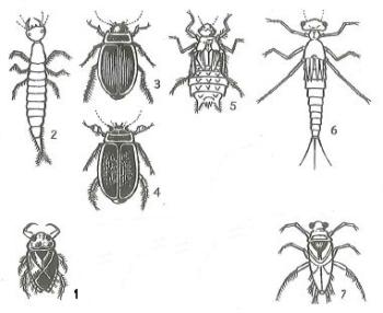 Flying insects and their larval form that are dangerous to fry under a month old.