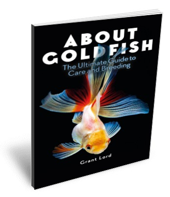 Goldfish eBook, the ultimate guide to care and breeding.