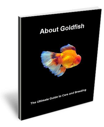 The Ultimate Guide to Goldfish care, breeding and diseases.