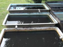 80 gallon fiberglass daphnia ponds.