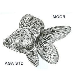 American Goldfish Association goldfish standard for the Moor.