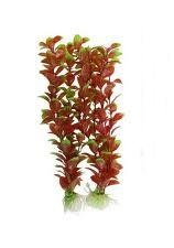 Red Bacopa, a popular foreground plant that resists Goldfish attack.